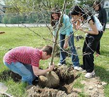 Generic-treeplanting-225x200